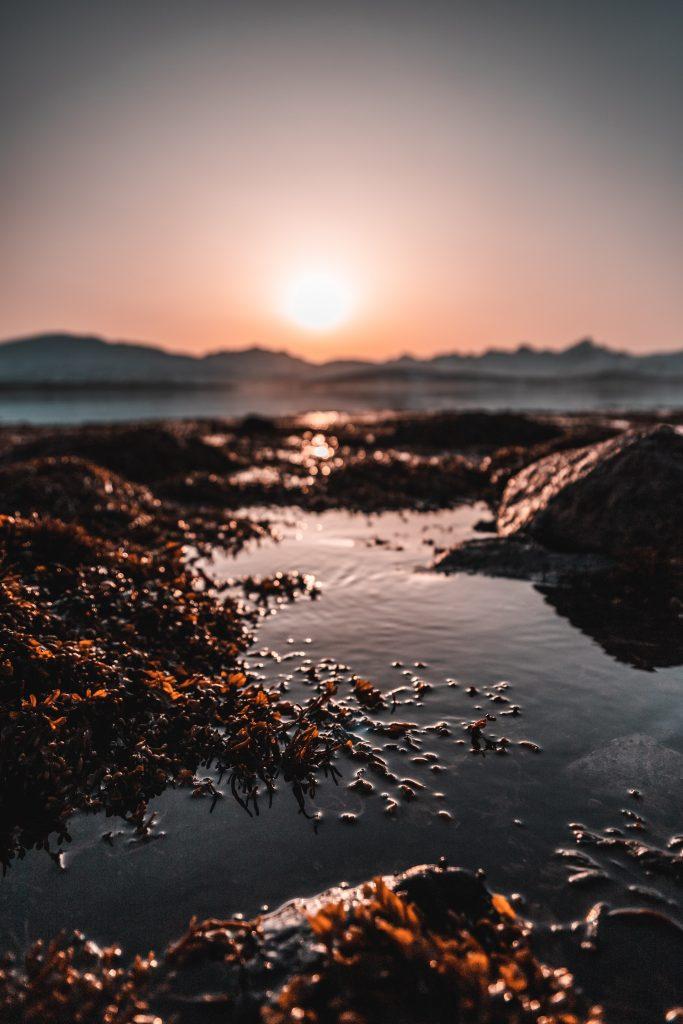 Seaweed beach at sunset