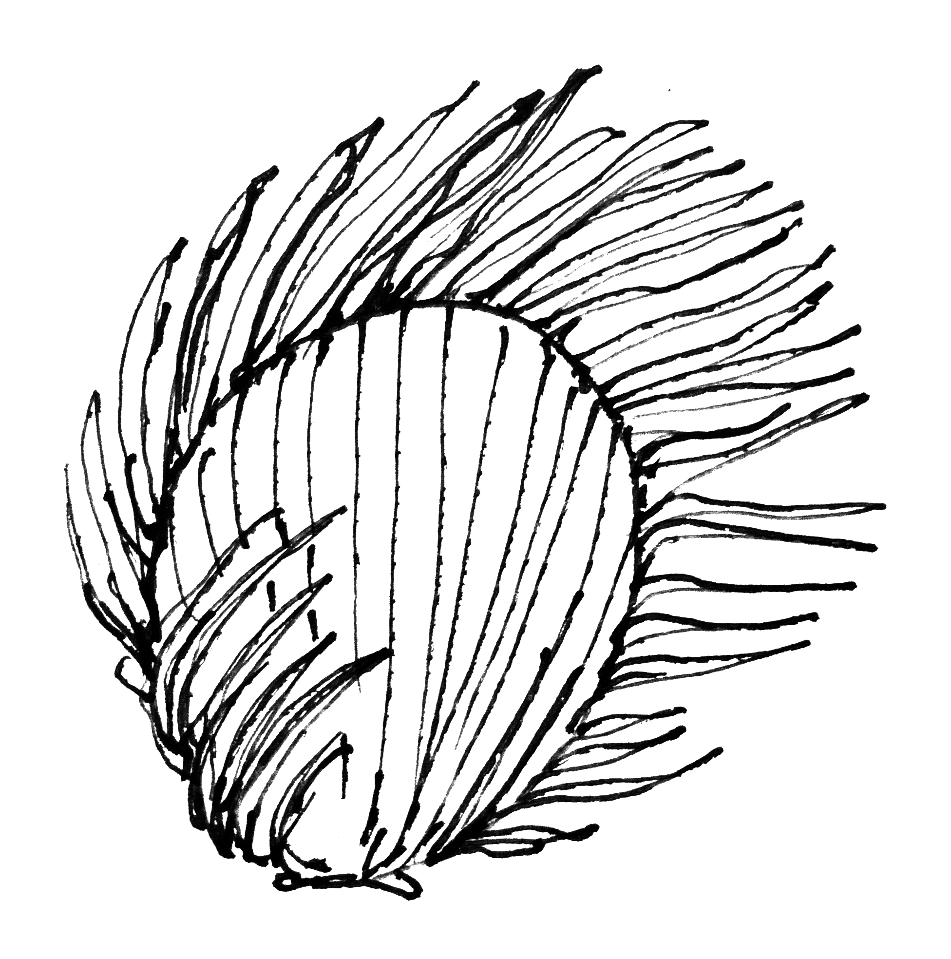 Line drawing of flameshell